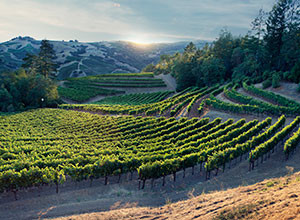 verite_alexander_valley_vineyards.jpg
